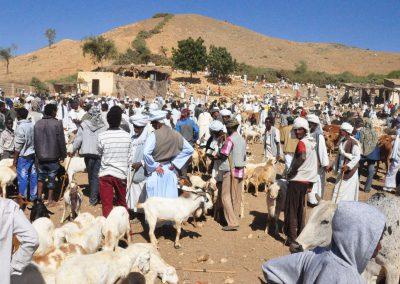 Mercato degli animali a Keren, Eritrea